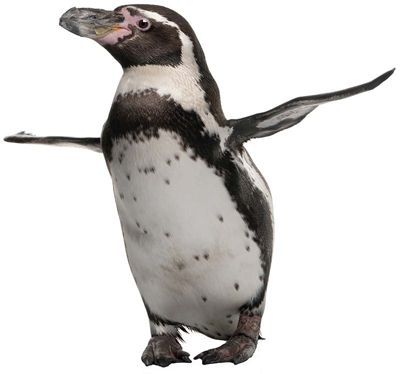penguin noshadow